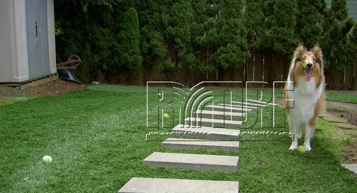 後院人工草景觀